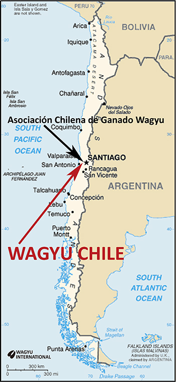 Wagyu Beef Cattle Breed In Chile - Map of kobe beef in us
